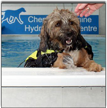 Spike-Tibetan-Terrier-cherrytree-canine-hydrotherapy-centre-kent
